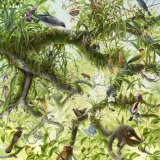 Isabella Kirkland, Nova: Canopy