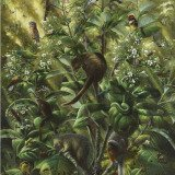 Isabella Kirkland, Nova: Understory