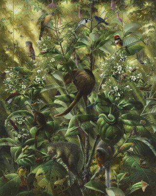 Isabella Kirkland Nova: Understory art for sale