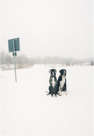 Untitled (German Dogs), from the series Here, by <a href='/site-admin/artists/artist/1098'>Jitka Hanzlova</a>