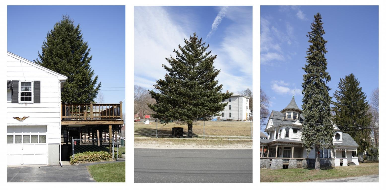 Matthew Jensen, Untitled (from Every Tree in Town), Set of 3