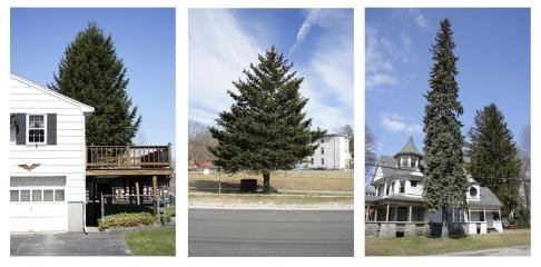 Untitled (from Every Tree in Town), Set of 3, by Matthew Jensen