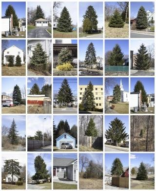 Untitled (from Every Tree in Town), Set of 30, by Matthew Jensen