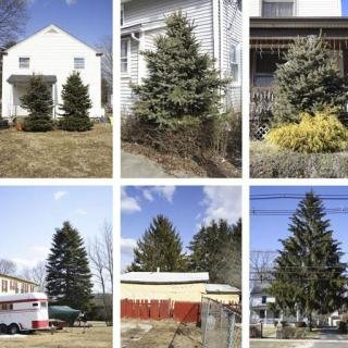 Untitled (from Every Tree in Town), Set of 30 art for sale