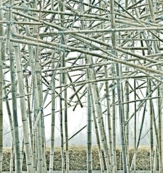 (Big Bambú) BBMet 03.15.2010_k441f, by Mike and Doug Starn