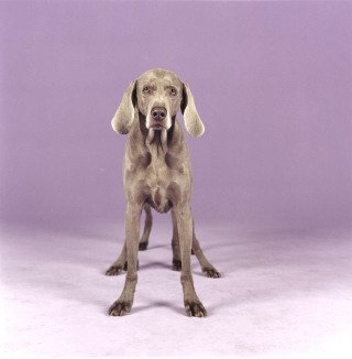 Batty Back Up, by William Wegman