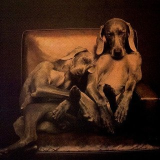William Wegman, Best Buddies