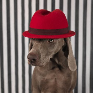 William Wegman, Red on Head