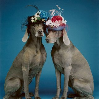 Sunday Best, by William Wegman