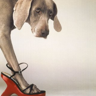 William Wegman, Walk-a-thon